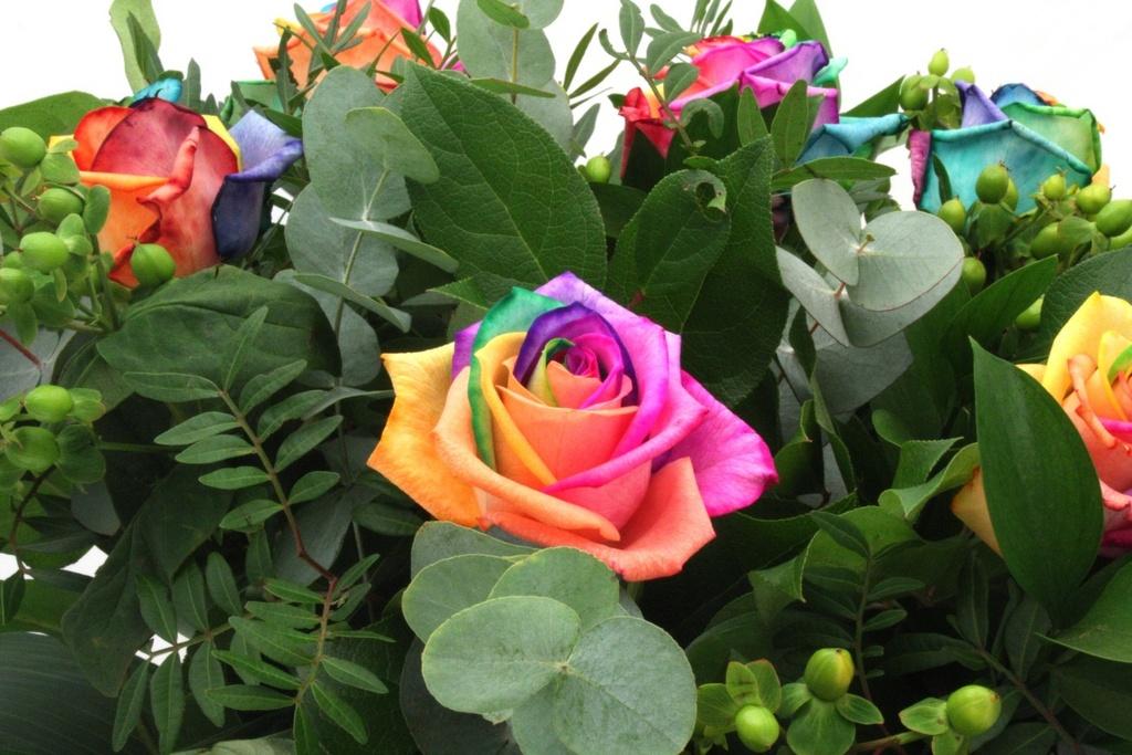Картинки радужные цветы 3