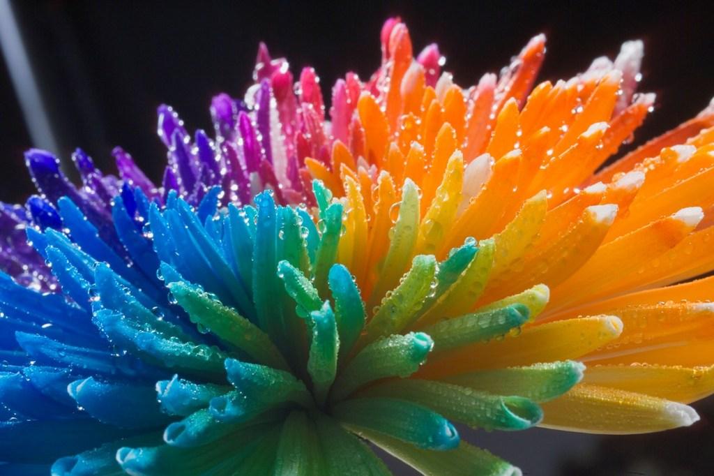 Картинки цветок разноцветный 7